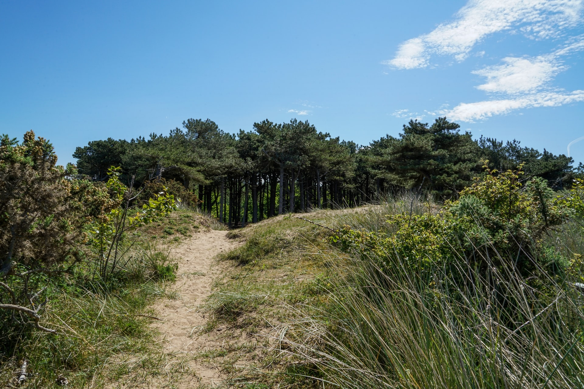 Formby Beach and Nature Reserve